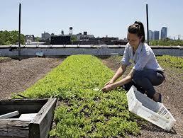 annie novak cutting greens
