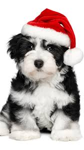 Many cute christmas dogs on your screen, floating shining particles, parallax effect! Warm Christmas Dog Iphone 8 Wallpapers Free Download