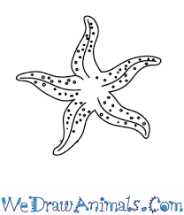 Small Picture How To Draw A Sea Star Starfish Thumbpng Coloring Pages Maxvision