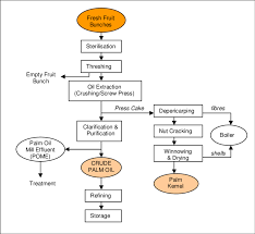 1 Palm Oil Process Flow Chart Adapted From Fao 2002