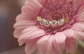 Resultado de imagen de el amor semilla