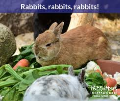 the number of rabbits as household pets is on the rise according to the 2007 u s pet ownership and demographics sourcebook published by the american