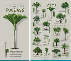 Palm Tree Identification Chart Related Keywords