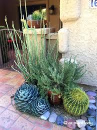 10 fuss free plants for the summer garden ramblings from a desert garden