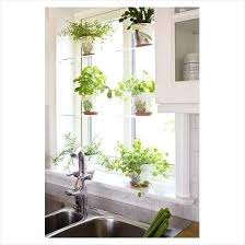 hanging indoor window herb garden herbs in the sink window glass shelves hanging indoor window herb garden