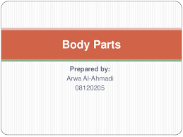 Body Parts Activity For Kids