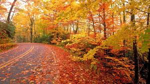 fall nature backgrounds. Contemporary Backgrounds Wallpapers For U003e Hd Fall Nature Backgrounds Intended P