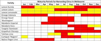 Citrus Growing Guide Part 1 Citrus Varieties For Melbourne
