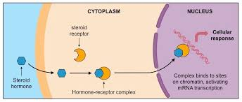 Types Of Hormones Bioninja
