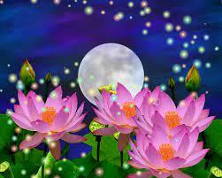 Beautiful 3d Flower Wallpapers - Moon ...
