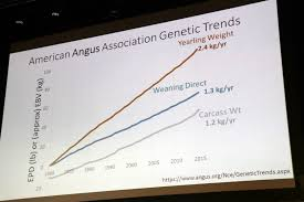 Angus Weight Chart Angus Breeders Urged Not To Overlook Maternal Traits Beef