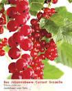 Een, rode, bessenstruik kopen, planten en verzorgen