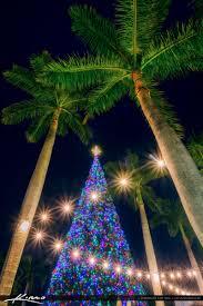 delray beach tree lighting. Delray Beach Tree Lighting. 40 Foot Christmas 2016 Lighting 2 O