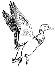 Small Picture printable 2014 duck coloring pages for preschoolers Coloring Point