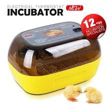 quail eggs in incubator