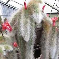 Egrow 20Pcs/Bag Succulent <b>Plant</b> Seeds Limited Hot Sale Seeds ...