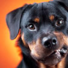 نصائح تربية الكلاب في المنزل لأول مرة Images?q=tbn:ANd9GcR90ISj9E7WwcfqerpkX3YCUgViSZZZkw3f4N5Xj8rQ0juS4214