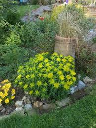 HPS: Euphorbia fragifera