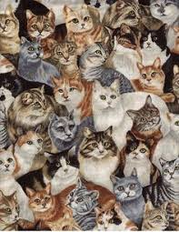 cats collage wallpaper.  Wallpaper Cat Collage  With Cats Wallpaper T
