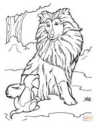 Disegno Di Cane Da Pastore Scozzese Con Cucciolo Da Colorare Avec