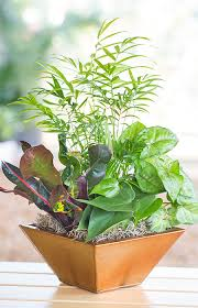Pair several easy-going house plants for a more interesting display.--Lowe's