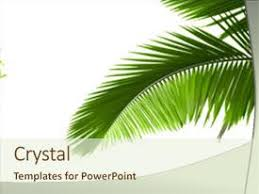 tree in powerpoint 5000 palm tree powerpoint templates w palm tree themed backgrounds