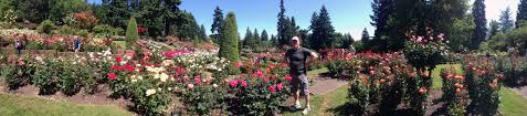 mike maddox in the portland rose garden