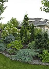 Small Picture The 25 best Evergreen landscape ideas on Pinterest Privacy