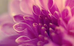 Purple Flowers Backgrounds Purple Flower Background 6977739