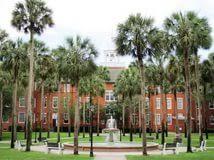 Freshman   University of Florida