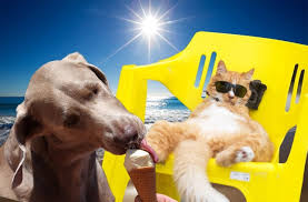 Image result for dogs in hot weather photos