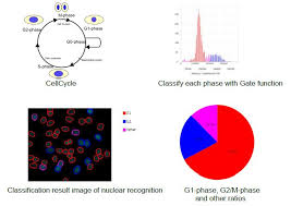 Cell Cycle Pie Chart Analysis Tutorial For Cellpathfinder Cellcycle Yokogawa