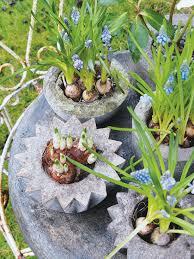 Great Plant Ideas For Garden 47 Succulent Planting Ideas With Succulent Container Garden Plans