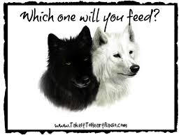 white wolf and black wolf fighting. Perfect Wolf White Wolf Black Wolf Throughout And Fighting L