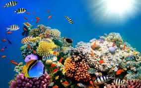 colorful coral reef wallpaper. Hd Coral Reef Wallpaper With Colorful