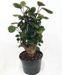 house plants. Indoor House Plants