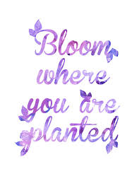 Purple Quotes Amazing Bloom Where You Are Planted Purple Art Print Home Decor Art Print