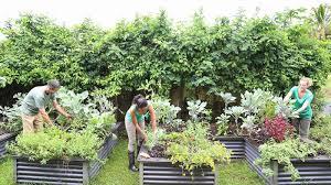 community gardening.  Gardening In Community Gardening P