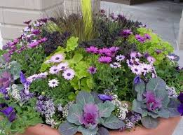 388 Best Container Gardens Images On Pinterest  Hydrangeas Container Garden Ideas Full Sun