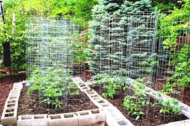 Kitchen Gardening Tips Garden Design Ideas Renovation Beautiful Vegetable Designs With