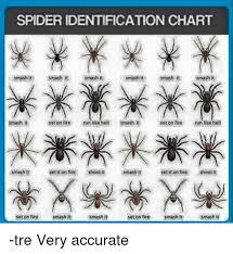 Spider Identification Chart Smashit Smash T Smash It Smash