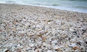 Shelling On Marco Island Florida Hilton Mom Voyage