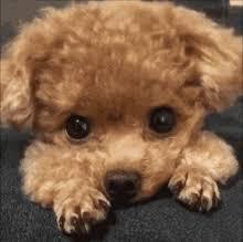 puppy dog gif puppy dog cute gifs