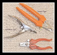 how to clip dog nails fool proof method