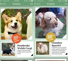 New App Uses Artificial Intelligence To Identify Dogs By