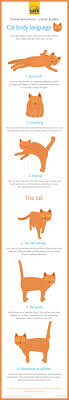 Cat Body Language Chart Cat Body Language Cat Behaviour Help Advice Cats