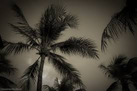 desktop background images black and white. Fine Desktop Palm Trees Barbados Wallpapers And Desktop Backgrounds Inside Desktop Background Images Black And White