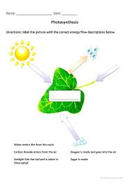Photosynthesis Coloring Pages Worksheets Oneupcolor Co