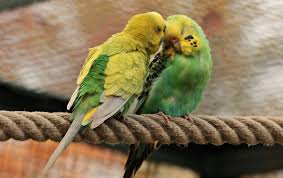 couple of cute colorful parrots free stock photos 1 65mb