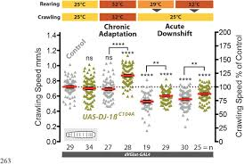 Reactive Oxygen Species Regulate Activity Dependent Neuronal
